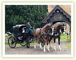 Wedding Horse and Carriage Kent.  Professional Horse and Carriage Hire.  Horse and Cart Rental Kent Weddings